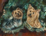 Benji and Bo were beautiful Yorkshire terriers, much beloved Yorkies