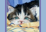 Forfura sweet tabby and white kitten with blue eyes