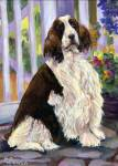 Gracie is a Springer Spaniel who loves to lounge in her beautiful garden.