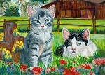 Mackenzie - Gray Tabby kitten and Vivian - black and white kitten - two barn cats in a field of flowers