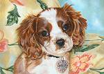 Molly, the adorable Cavalier King Charles spaniel