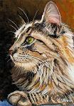 Long-haired brown tabby cat close-up with green eyes
