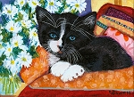 Socks - Tuxedo kitten with daisies and red, pink and orange pillows