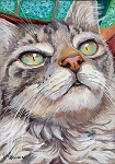 Veludo - Gray tabby cat long-haired with green eyes close-up