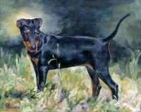 Dog painting by Connie Bowen of Bug, a fabulous, award-winning Manchester Terrier. Manchester terrier dogs are so sleek and athletic!