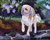 Dog Painting by Connie Bowen of Junior, an adorable Lhaso Apso bundle of love.  Lhaso Apsos are so sweet and cuddly!